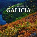 Wine vineyards in galicia